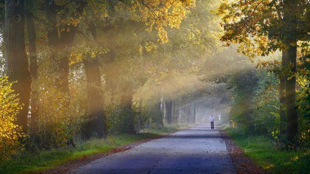 Ochrana lesa – opatrenia