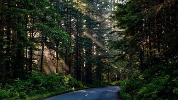 Ochrana lesa